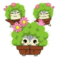 Cactus Brothers