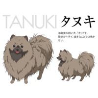 Image of Tanuki