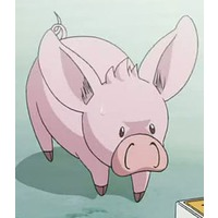 Pig-Berus